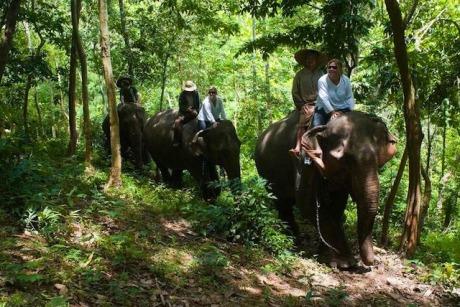 Elephant riding luang prabang