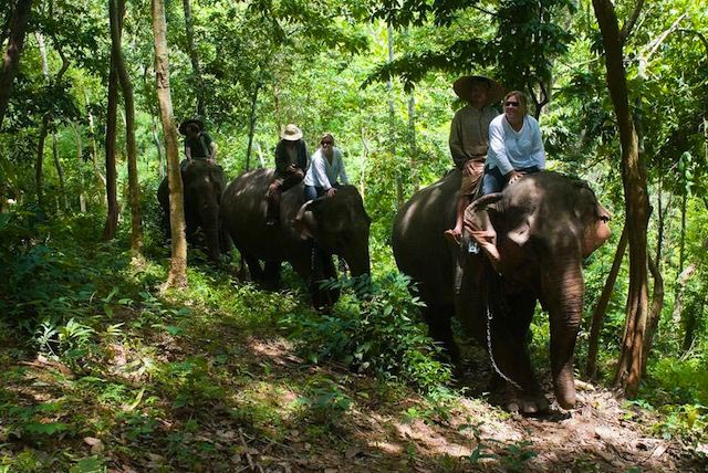 Elephant Trail Expedition from Luang Prabang